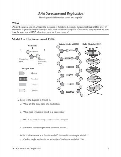Dna Structure And Replication Worksheet - Delibertad