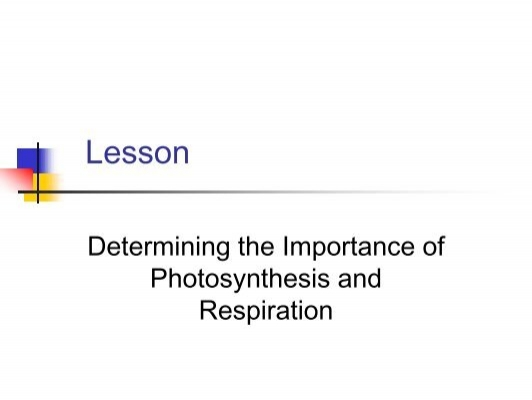 the importance of photosynthesis and respiration 1 lab #6 – photosynthesis and cellular respiration introduction in order to survive, organisms require a source of energy and molecular building blocks to construct all of their biological molecules.