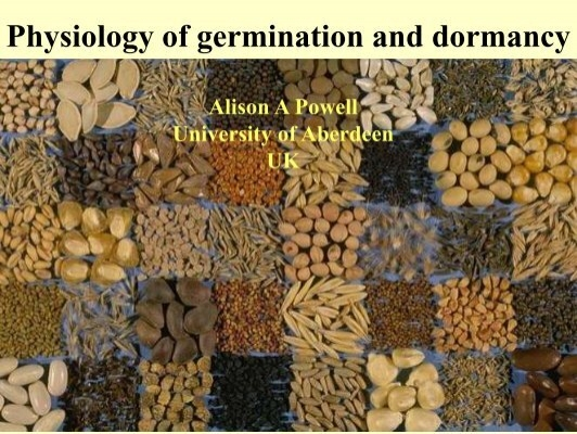 physiology of seed germination pdf