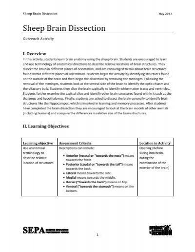 Lesson Plan Template- - Project NEURON