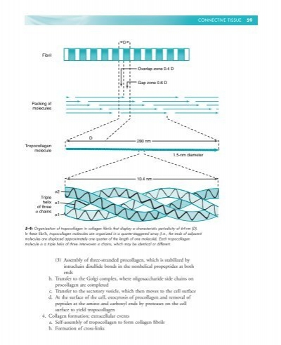 HISTOLOGY BIOLOGY CELL REVIEW RAPID AND