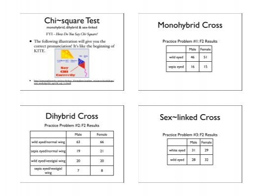Monohybrid Magazines – Sex Linked Punnett Square Worksheet