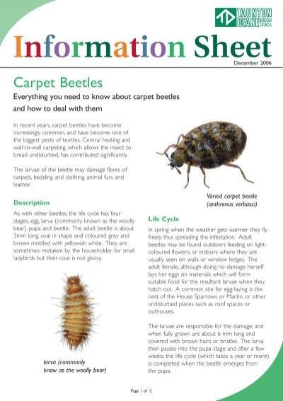 Carpetbeetles Factsheet Taunton Deane Borough Council
