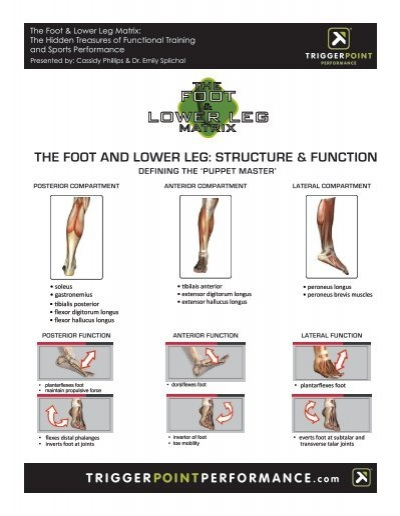 THE FOOT AND LOWER LEG: STRUCTURE & FUNCTION - Idea