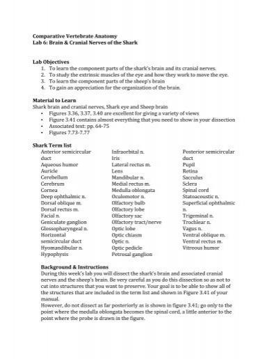 Comparative Vertebrate Anatomy Lab 6: Brain & Cranial ... - Courses