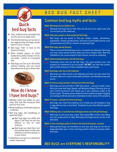 Quick Bed Bug Facts How Do I Know I Have Bed Bugs?   Social Services