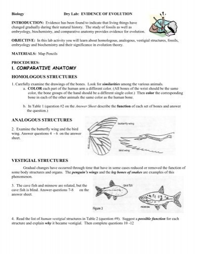 lab evidence of evolution keller isd schools - Evidence Of Evolution Worksheet Answers