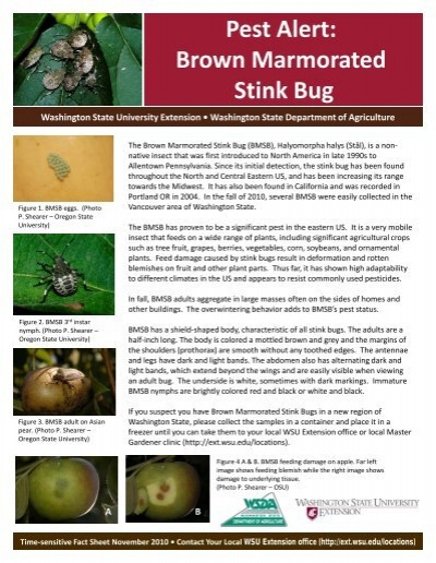 Pest Alert: Brown Marmorated Stink Bug - Washington State
