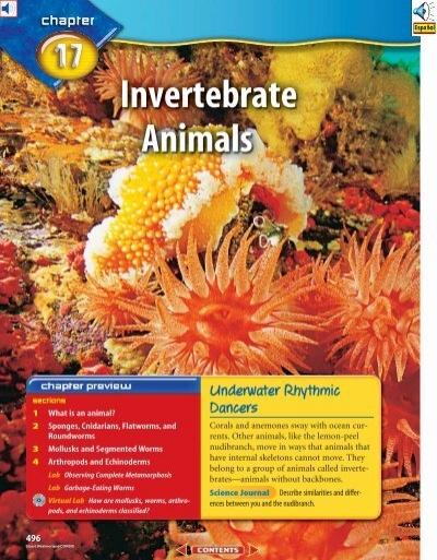 Marine Invertebrates Study Guide Answer