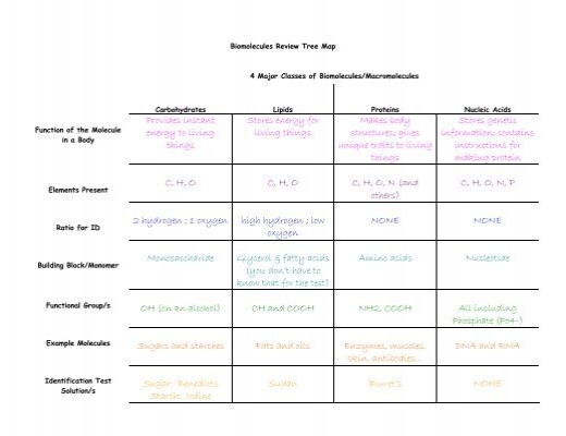 {Biomolecule Review Tree Map ANSWERS Hart High School – Biomolecule Worksheet