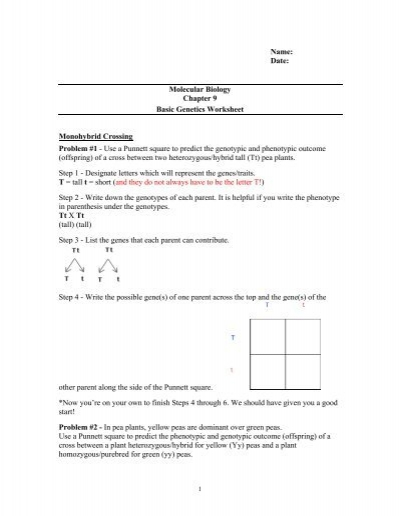 Worksheet Easy Mendelian Genetics Problems: ch 9 punnet square worksheet,