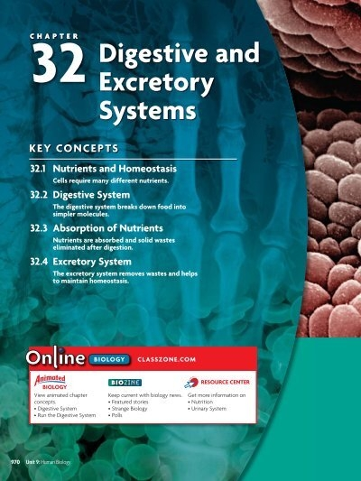 32 4 Excretory System