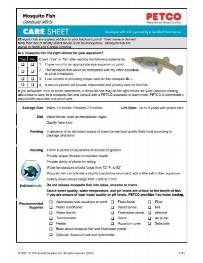 Mosquito Fish - Petco