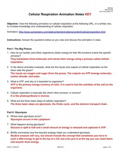 Atp Worksheet Answer Key Promotiontablecovers