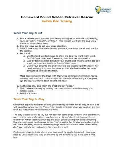 Sit Sit Stay - Homeward Bound Golden Retriever Rescue