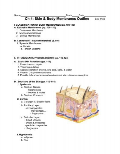 Ch 4 Skin Body Membranes Outline