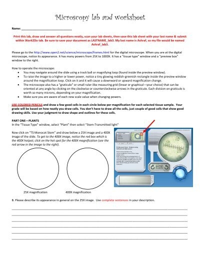 Microscopy Lab And Worksheet