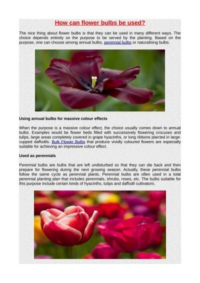 How Can Flower Bulbs Be Used