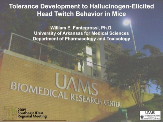 tolerance to hallucinogens essay Hallucinogens in history essay 993 words | 4 pages hallucinogens are a class of drugs that share a vast history, and were used for spiritual and religious practices since the prime of early civilization.