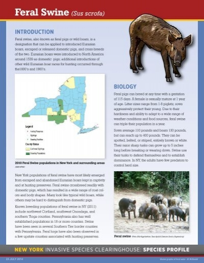 the ecological impacts of feral swine essay Swine meat and diseases essay swine meat and diseases many swine disease outbreaks occur every year and are most often related to a large number of pigs raised in the same area or facility continuously.