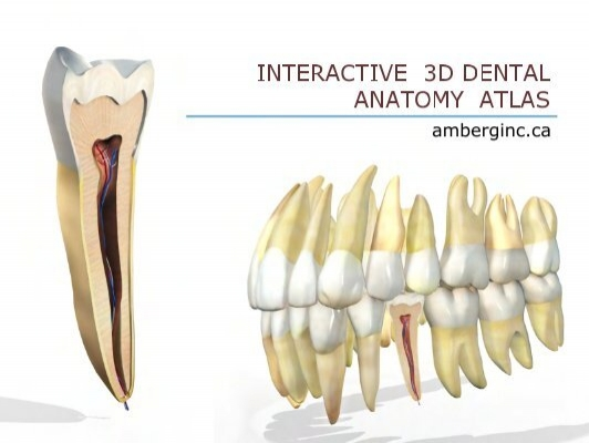 Interactive 3d Dental Anatomy Ovidiu Ciobanu