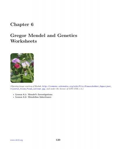 chapter 6 gregor mendel and genetics worksheets. Black Bedroom Furniture Sets. Home Design Ideas