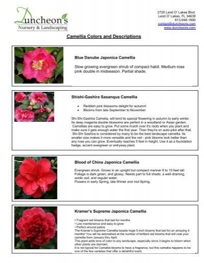 Camellia Colors And Descriptions