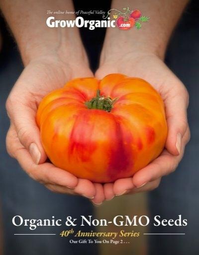 "Rare Organic Vegetable Melon Seeds /""Valencia/"" Winter Melon Natural 60 seeds."