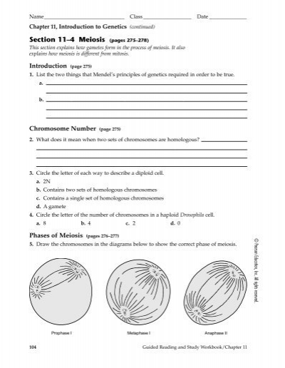 Phases Of Meiosis Worksheet Answer Key - Davezan
