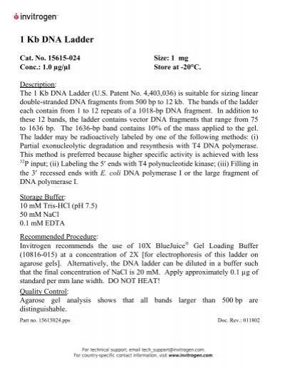 1 kb plus dna ladder invitrogen pdf
