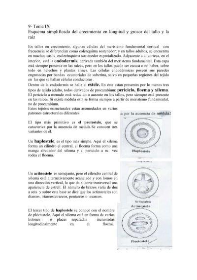 Anatomia Vegetal Sabugueiro