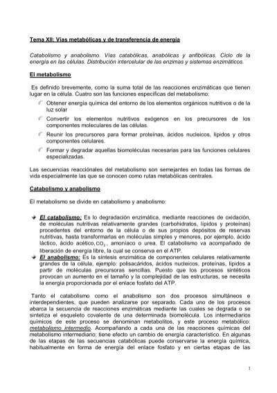vias anabolicas pdf