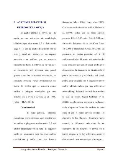 2. ANATOMIA DEL CUELLO UT