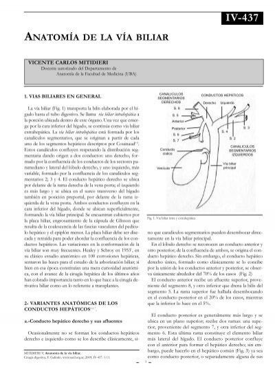 Anatomía quirúrgica de las vías biliares.