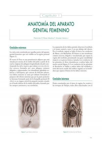 ANATOMÍA DEL APARATO GENITAL FEMENINO - Univadis