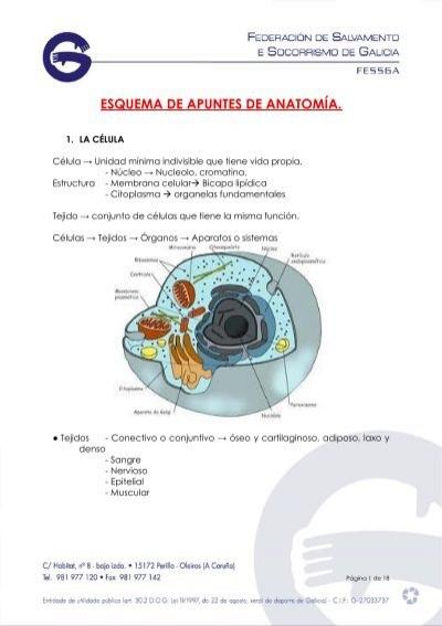 anatomía y fisiología) - UNAM