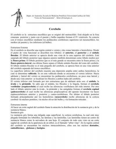 9. El Cerebelo y sus conexiones. - Escuela de Medicina