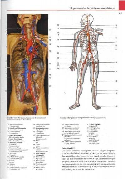 Anatomía general Organiz