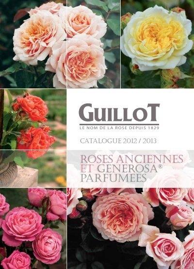 roses anciennes et generosa parfumees roses guillot. Black Bedroom Furniture Sets. Home Design Ideas