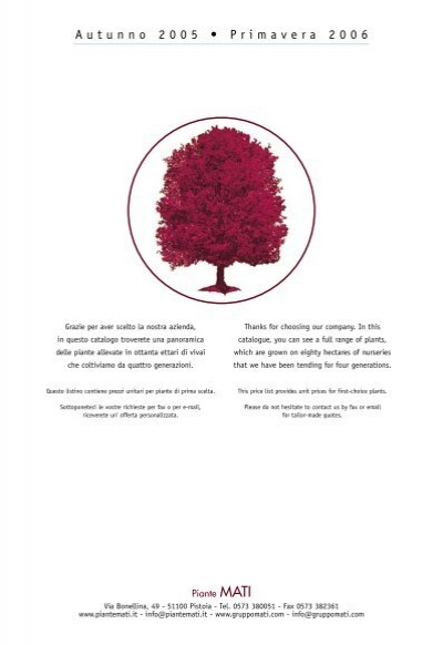 Acer Palmatum Bloodgood innesto vaso 15 rosso porpora red good price