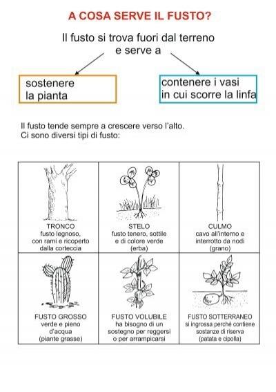 Tipi diversi di corteccia - Diversi tipi di figa ...