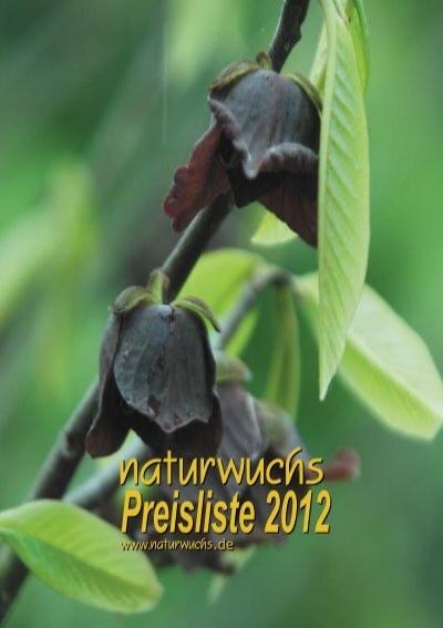 Hortensie Bauernhortensie Hydrangea macrophylla /'Hot Red Lila/'® 30-40 cm im Con.